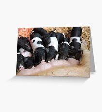 Piggy Feeding Time Greeting Card