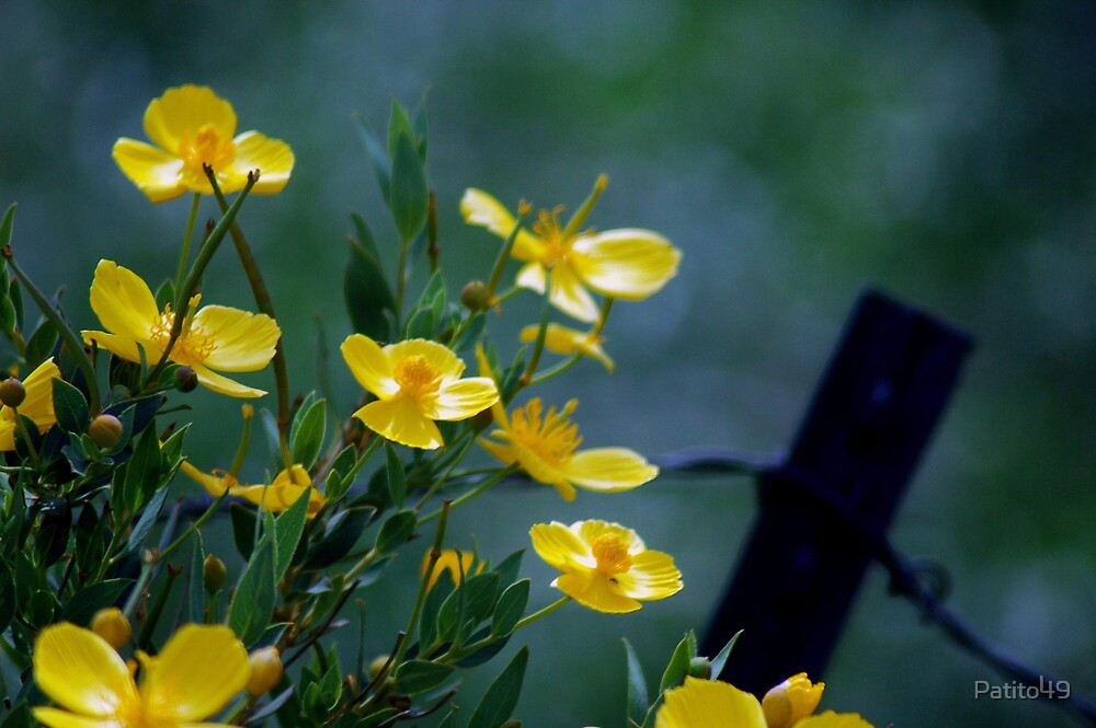 Yellow Flowers by Patito49