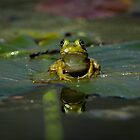 Froggy 3 by Douglas  Stucky