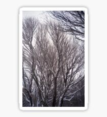 Colorful Winter Willow Trees Sticker