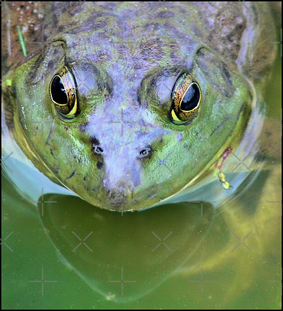 Frog Eyes by Rachel Leigh