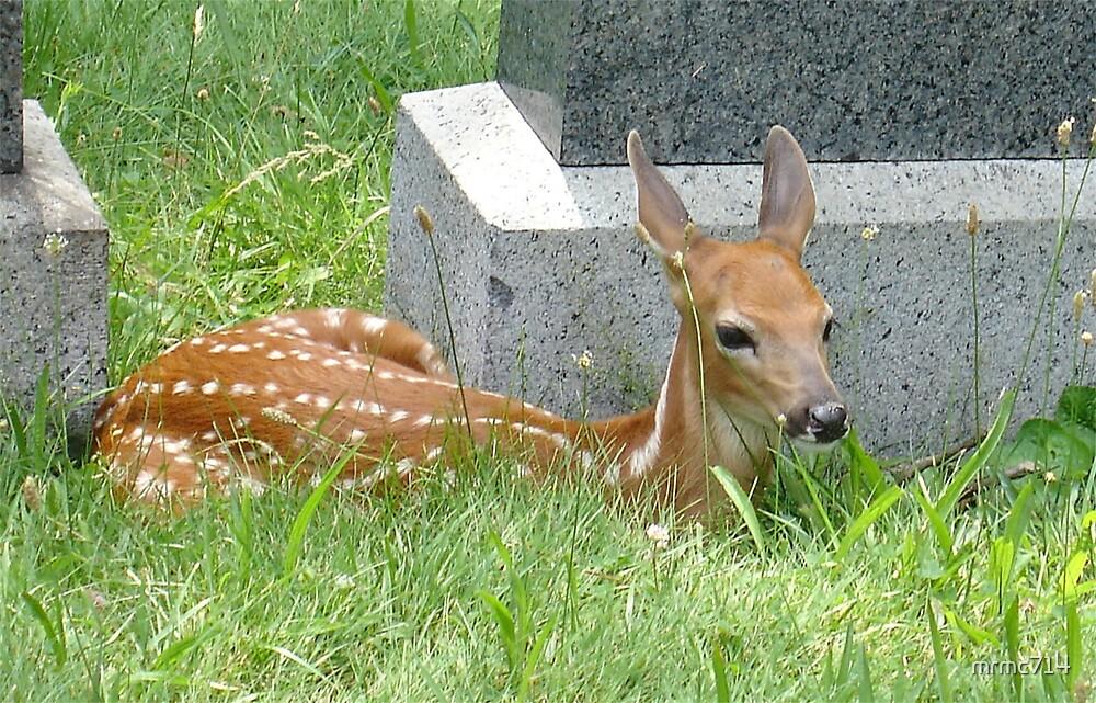 baby deer by mrmc714