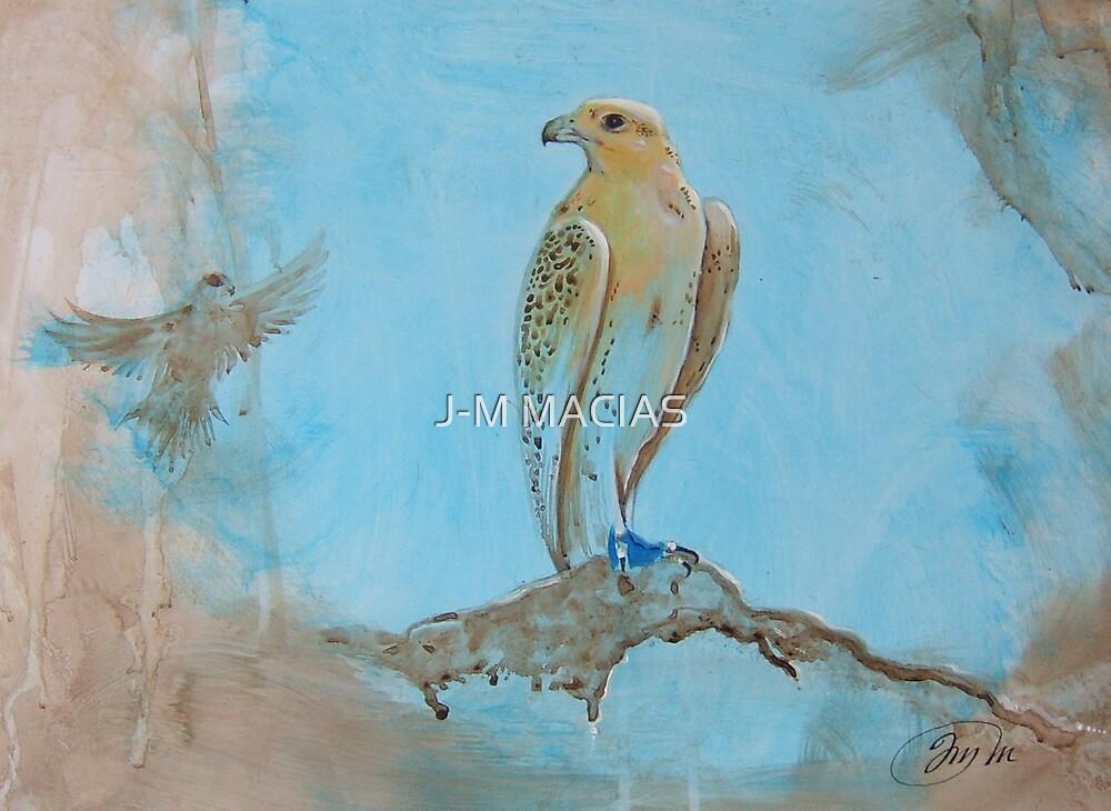 dubai falcon by J-M MACIAS