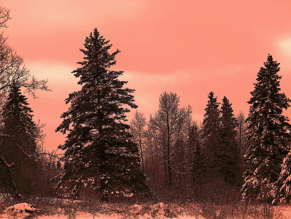 Peachy Spruce by Gene Cyr