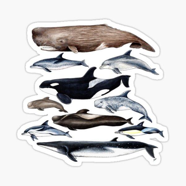 Wale, Delfine, Orca und Pottwale Sticker