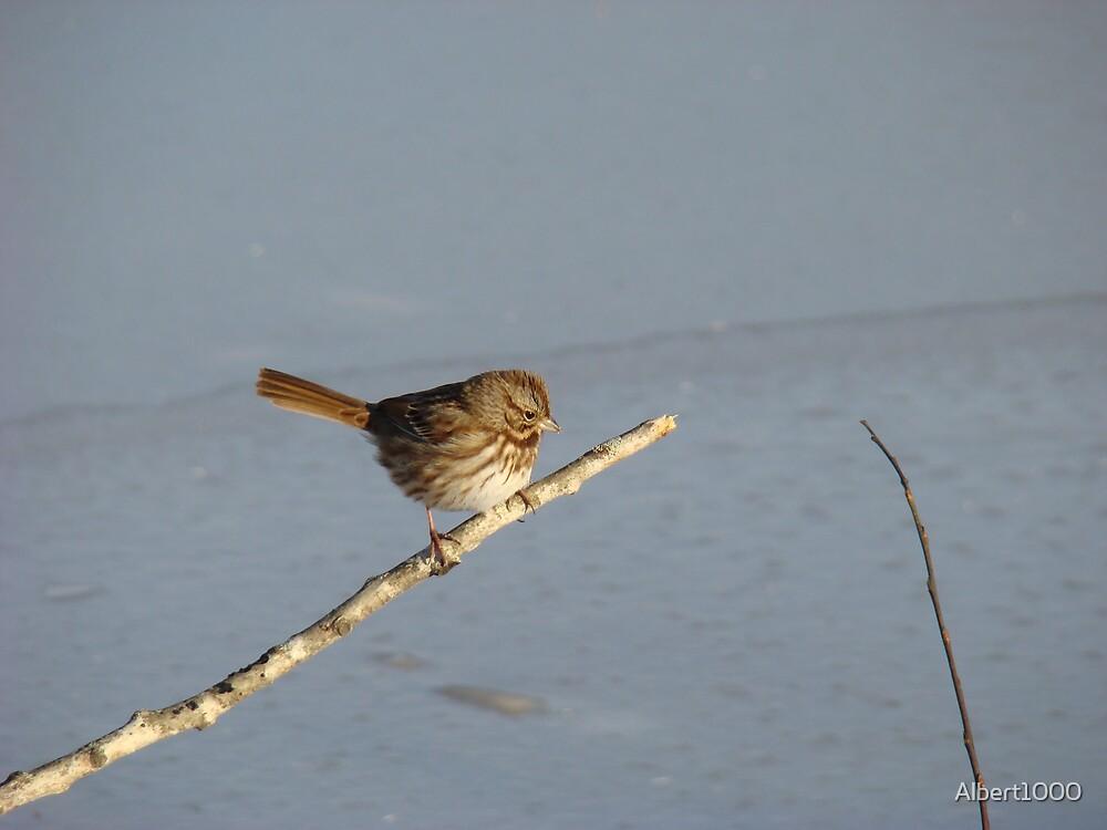 Winter bird #1 by Albert1000