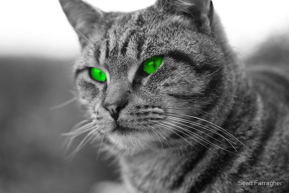 Enviromental Cat by Sean Farragher