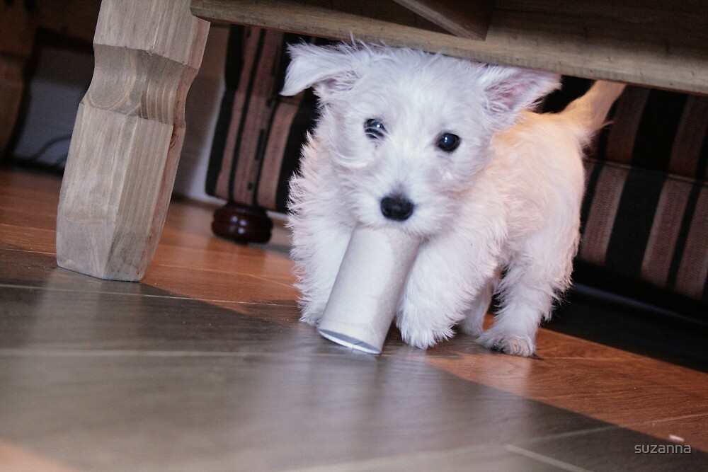 The Andrex Puppy, Well Sort Of!!! by suzanna