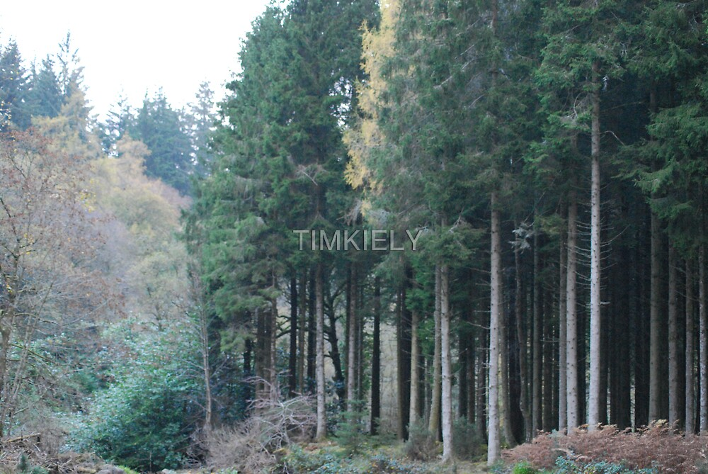 TALL TREES by TIMKIELY