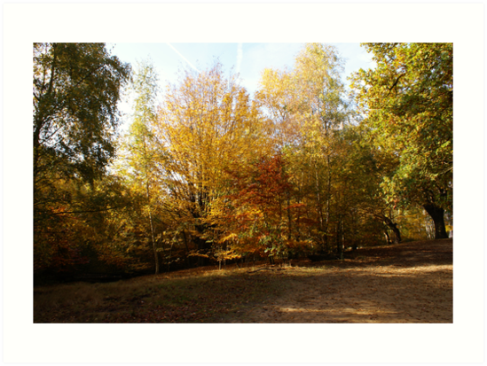 Epping Forest by philmilton
