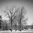 Winter Tree by David Lamb