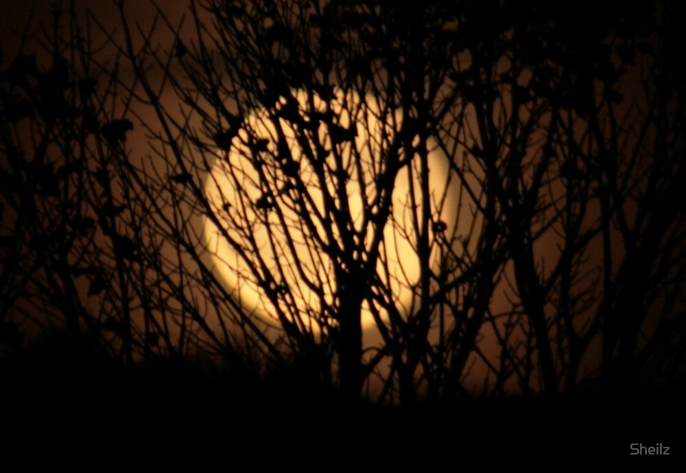 Moon Rising Above The Dunes by Sheilz