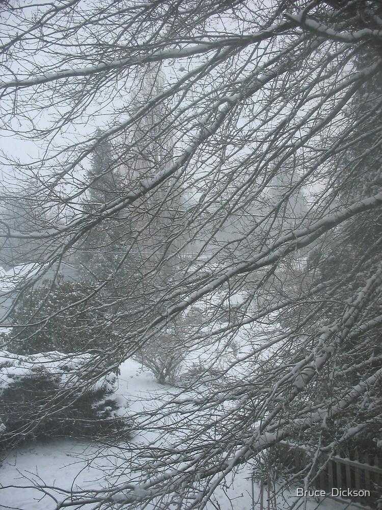 pinoaks winter blast by Bruce  Dickson