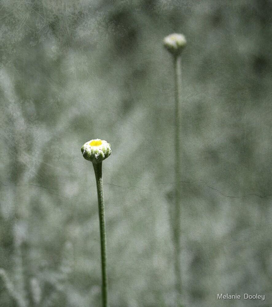 Flower Bud by Melanie  Dooley