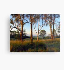 Dawn in the bush Metal Print