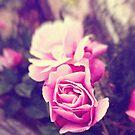 Pink roses by Silvia Ganora