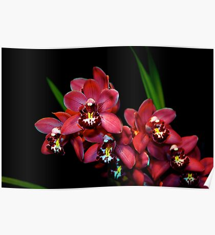 Teri's Orchid Poster