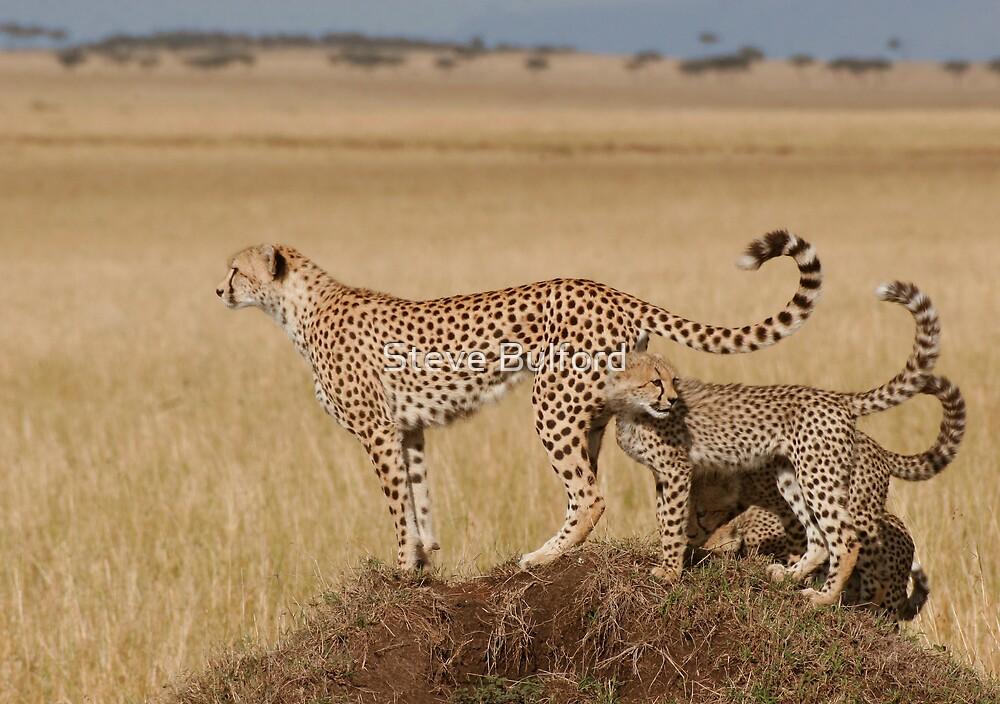 Cheetah Tails by Steve Bulford