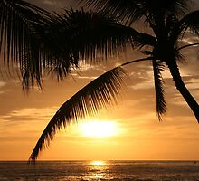 Perfect Palm by Randy Richards
