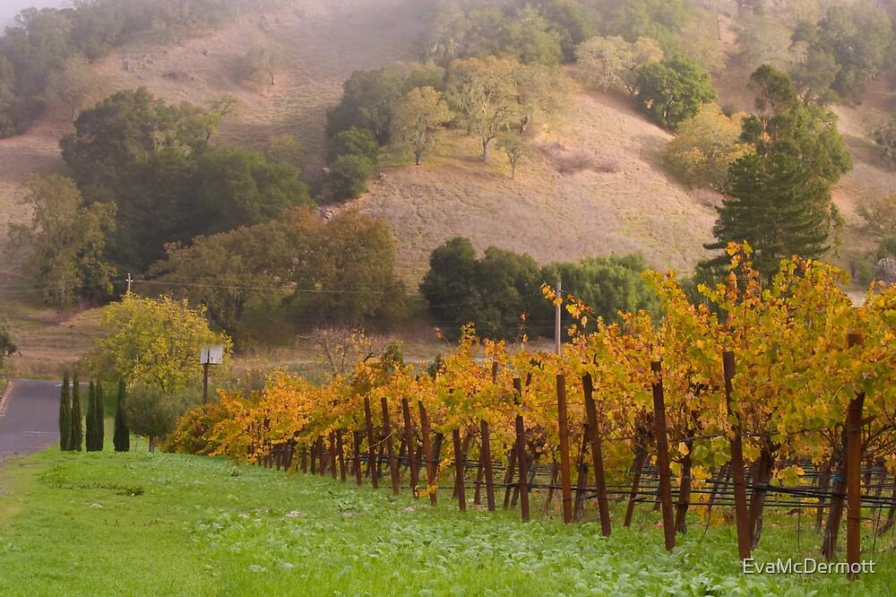 Vineyard by EvaMcDermott