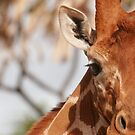 Giraffe by Steve Bulford