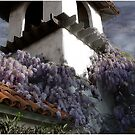 Wisteria On a Roof by Wayne King