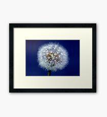 Dandelion (Cotton) Framed Print