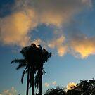 THREE PALMS by fsmitchellphoto