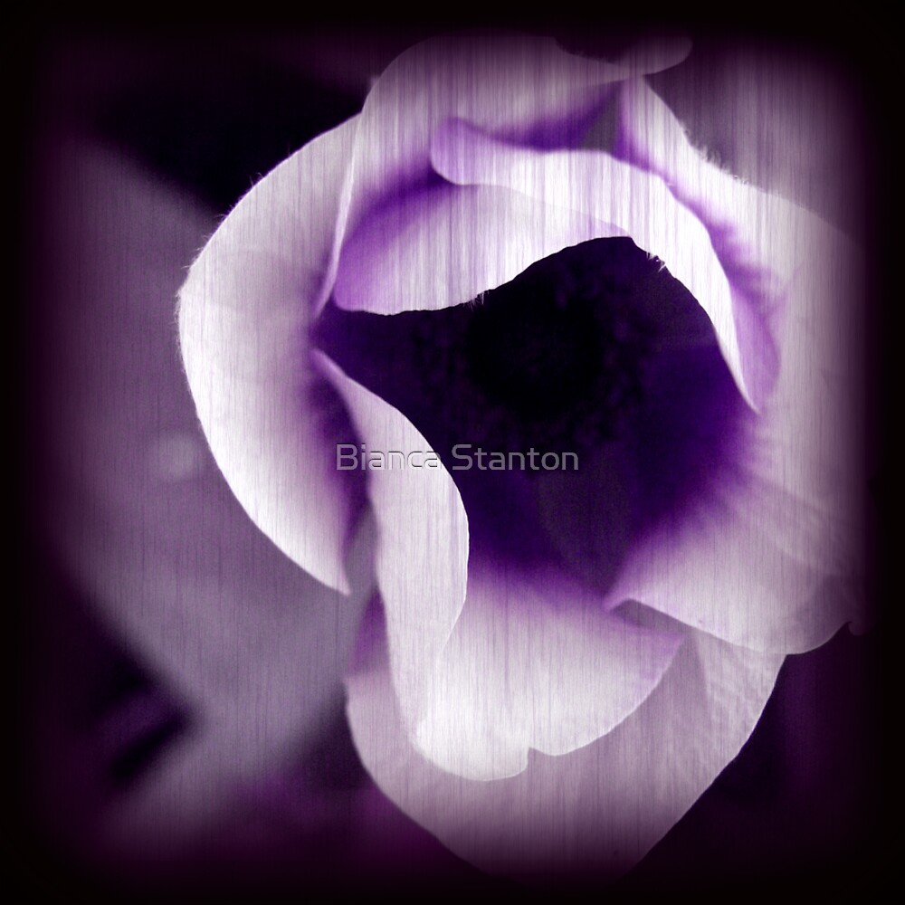 Purple Passion  by Bianca Stanton
