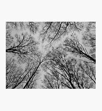 Trees # 3 Photographic Print