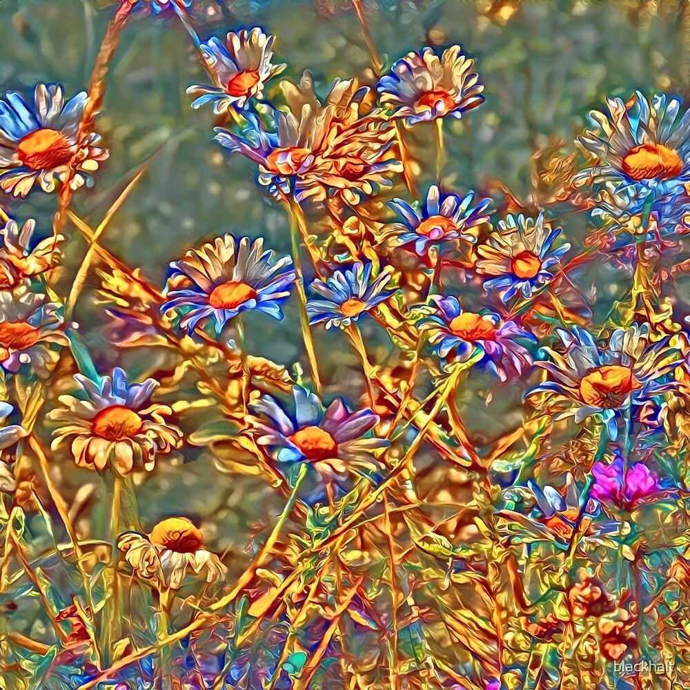 Wildflowers by blackhalt