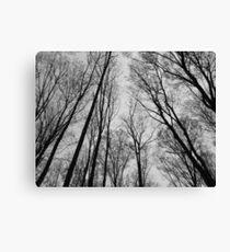 Trees # 1 Canvas Print