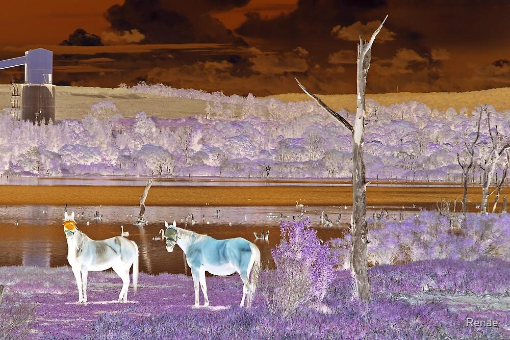 White Stallions by Renae