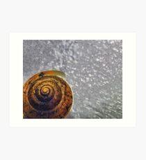 Spirals Art Print
