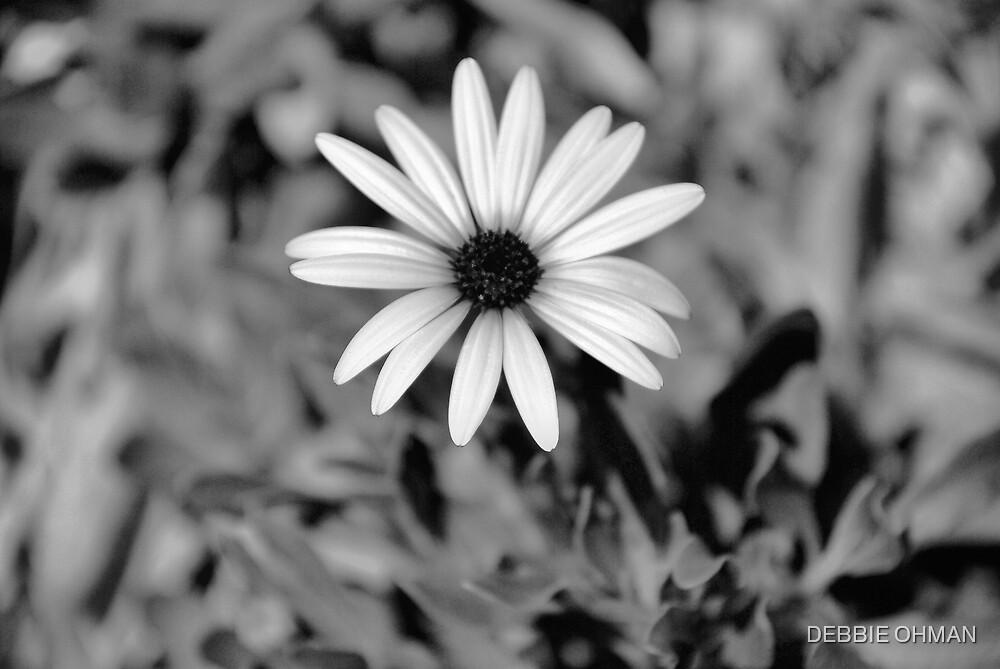 Daisy by DEBBIE OHMAN
