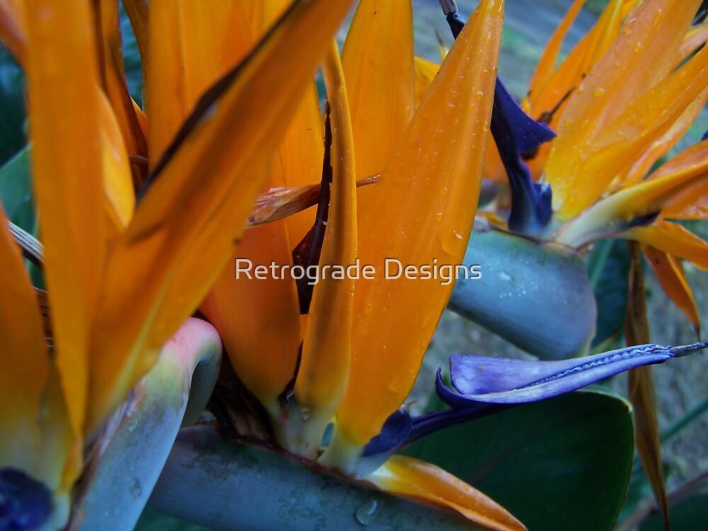 Bird of Paradise by Retrograde Designs