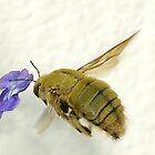 Carpenter Bee by Macky