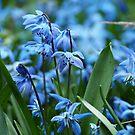 Blue Spring by kostolany244