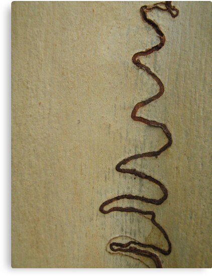 Scribbly Gum Tree markings by Patricia  Knowles