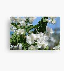Easter White Canvas Print