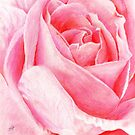 Pink Rose by Genevieve Crabe
