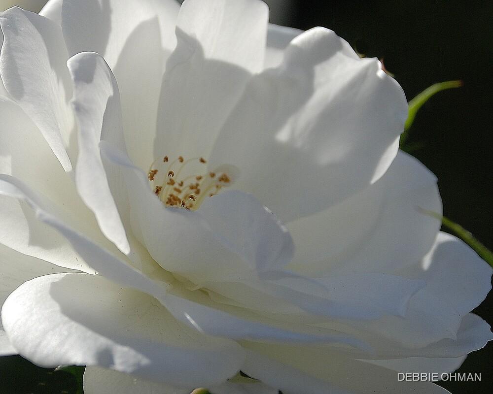 White Beauty by DEBBIE OHMAN