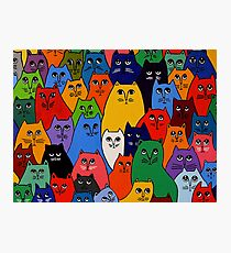 Cat Pack 2 Photographic Print