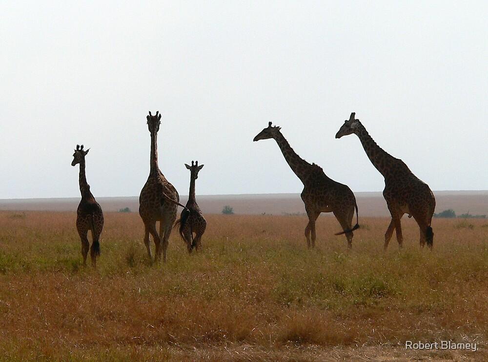 Giraffes Africa by Robert Blamey