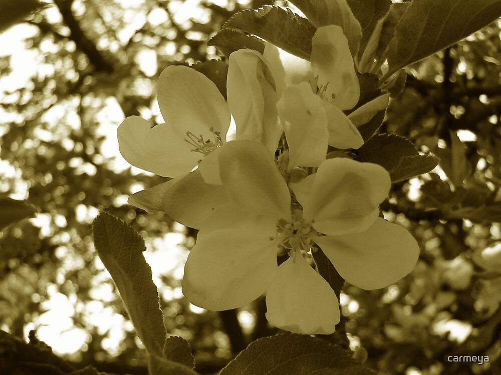 Apple by carmeya