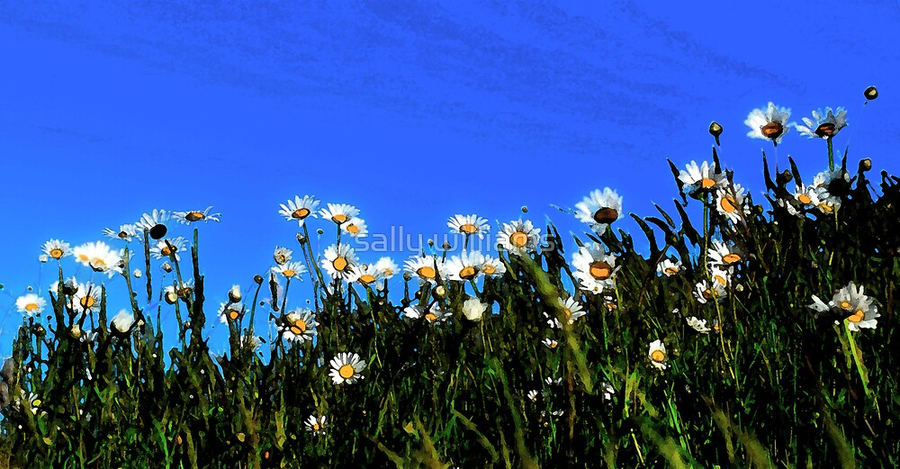 Daisies by sally williams
