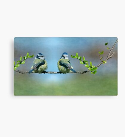 Two Little Tits  Canvas Print