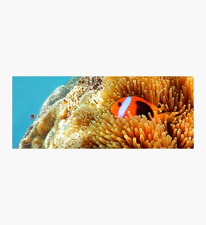 Clown Fish Snuggle Photographic Print