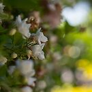 Flowers in the leaves by Danielle Espin