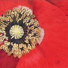 Poppy by Genevieve Crabe